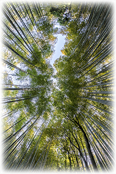 bamboo forest scene for Patient Resources at Vahila Acupuncture and Massage Therapy